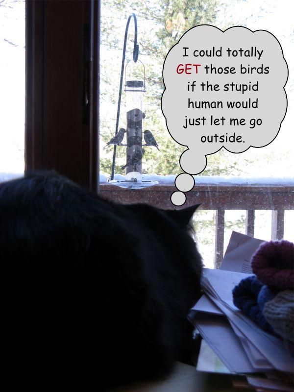 W birds