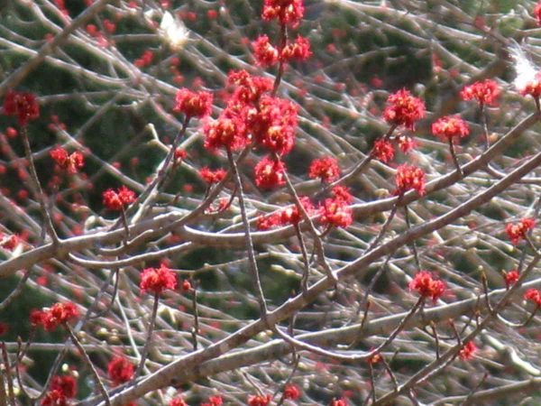 Tree blossoms close