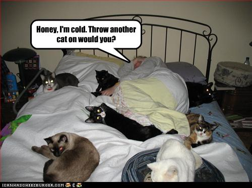 Funny-pictures-many-cats-are-on-bed