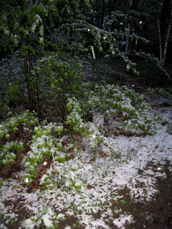 Snow w flash