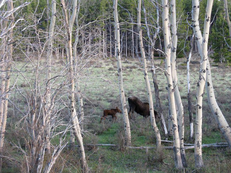 Wyoming 1 010