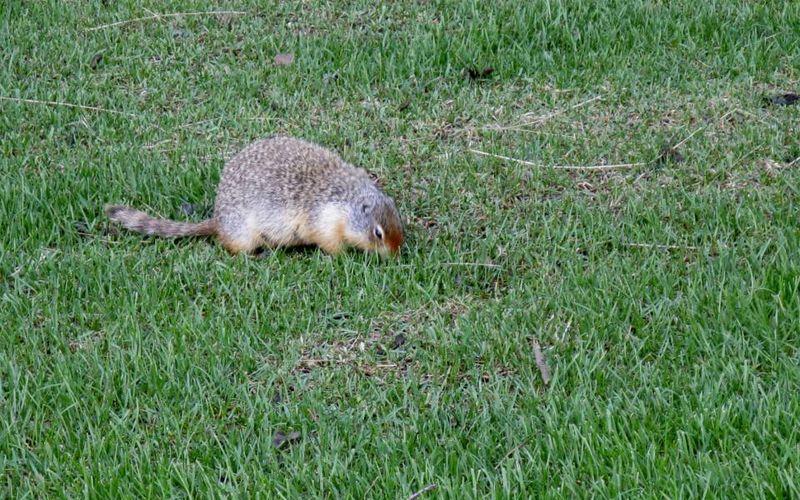 Ground animal 1