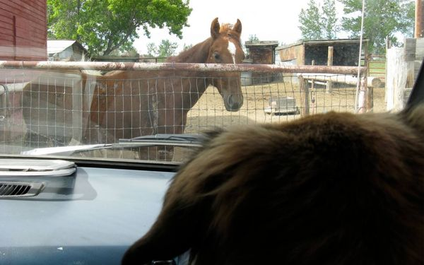 Dogs horse