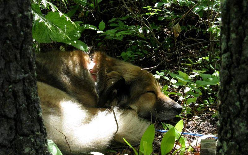 Lucy sleep woods