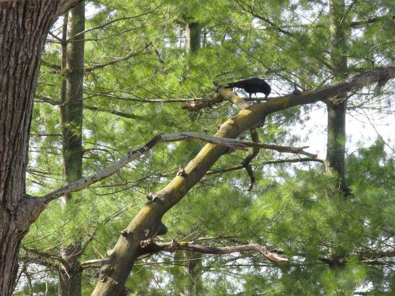 Crow 2e
