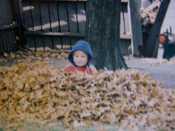 1993 leaves