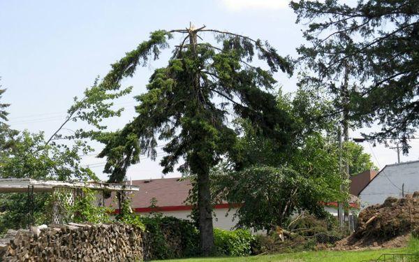 Tree topless