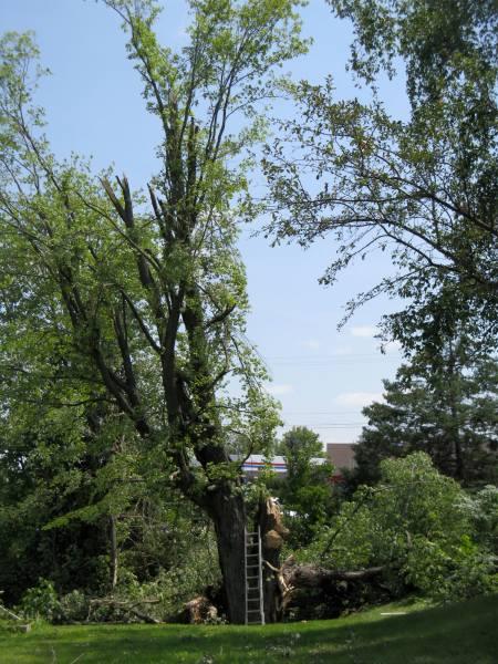 Tree sad