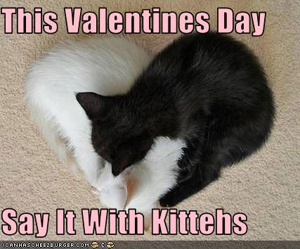 Funny-pictures-kittens-sleep-in-heart-shape