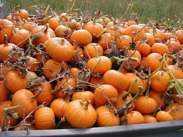 Pumpkins.truck