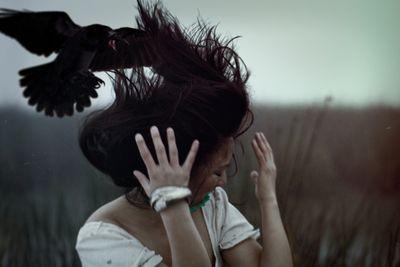 AH birds