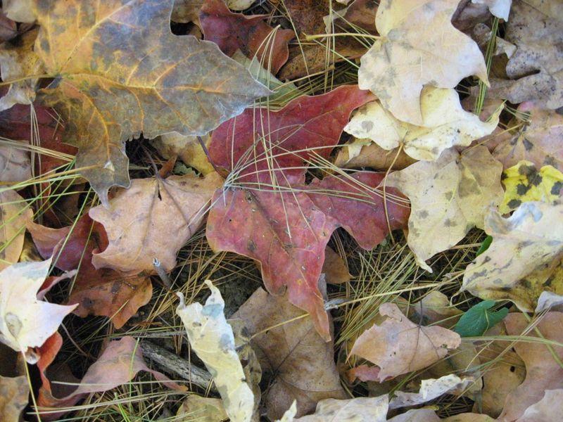 BaxterKnits leaves