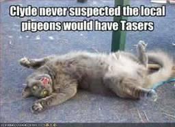 Tasers