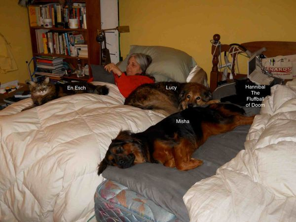 How I sleep w animals