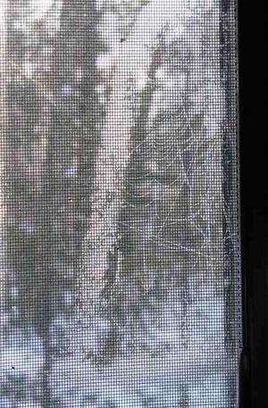 Web winter