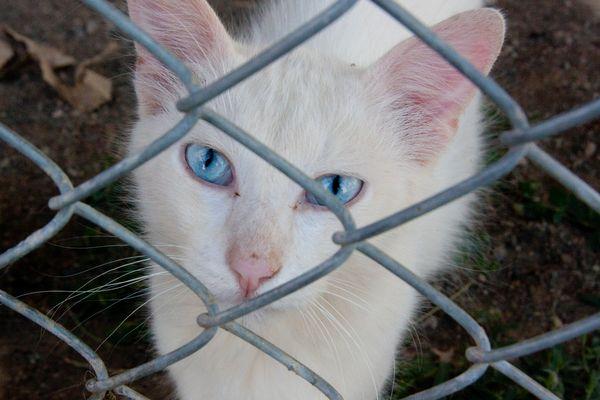 Chain link kitteh