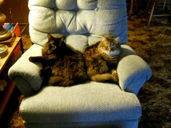 Cats & rocker