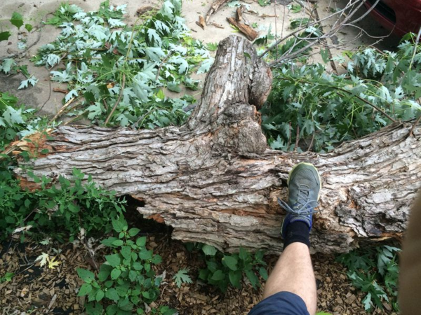 If this is the branch, imagine the size of the tree.