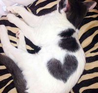 Heart cat 8