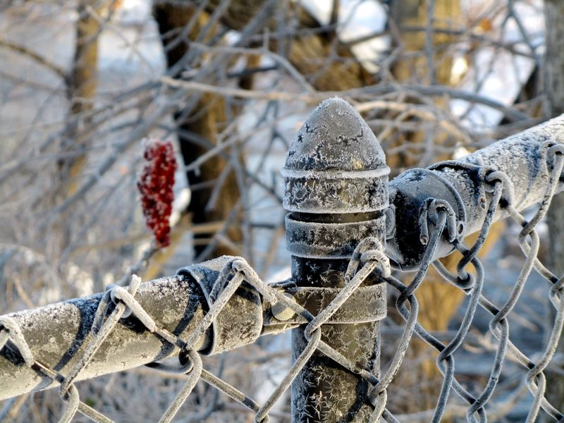Winter chain-link fence frost