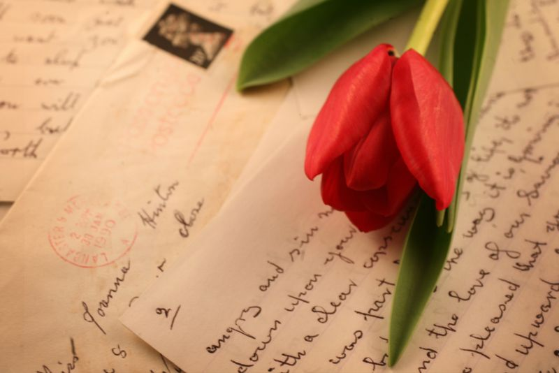 Letter w tulip