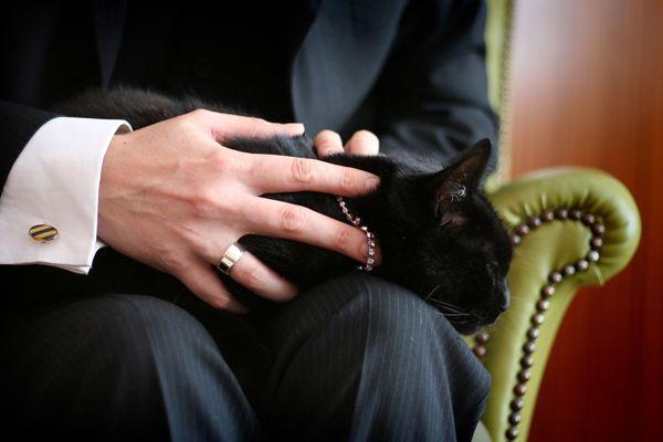 Cufflink n cat