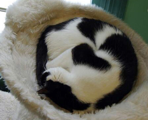 Heart cat 2