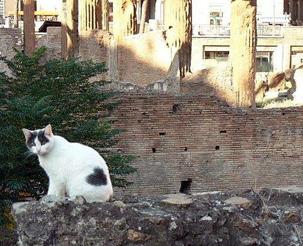 Heart cat 4