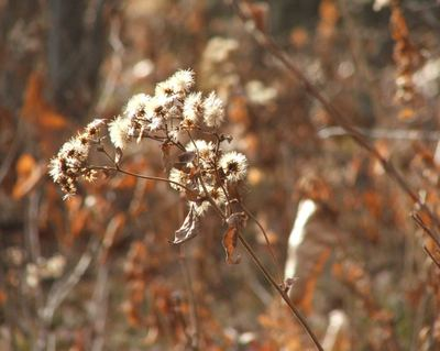 061125_aster