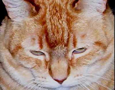 2003_fatcat