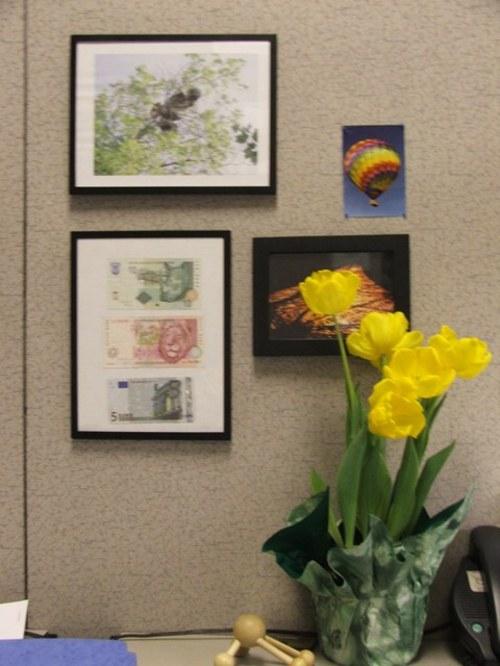 070316_tulips