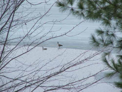 0703_geese