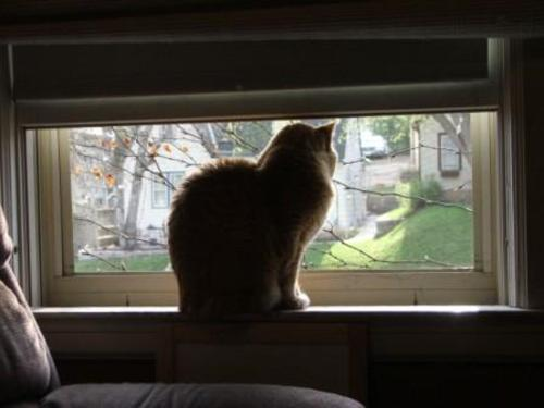 070427_tabby_in_window
