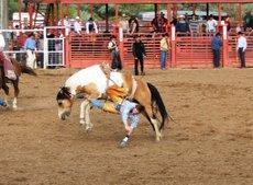 Rodeo_bareback_rider