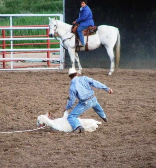 Rodeo_calfroping