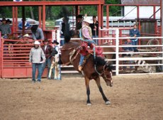 Rodeo_saddle_bronc_rider