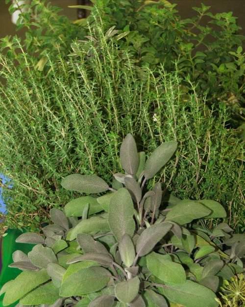 0707xx_herbs