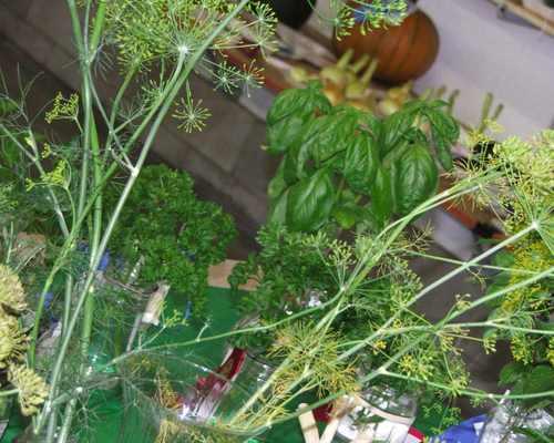 0707xx_herbs_n_veg