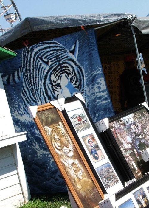 0707xx_tigers