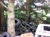 070807_tires_in_pines