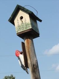 070828_yard_birdhouse