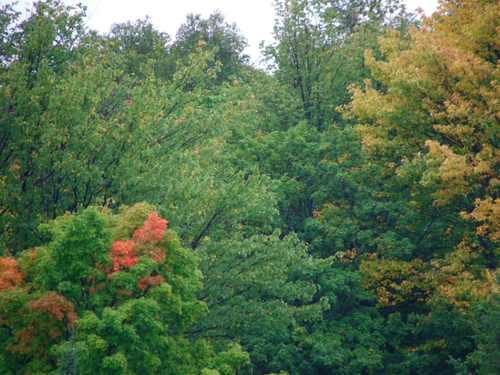 070828_trees_turning