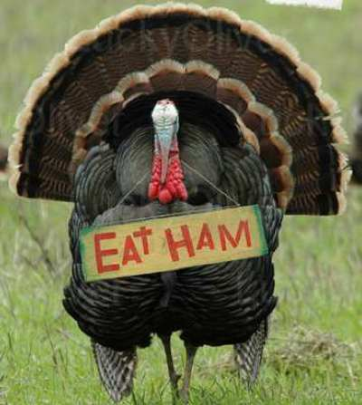 071122_turkey_eat_ham