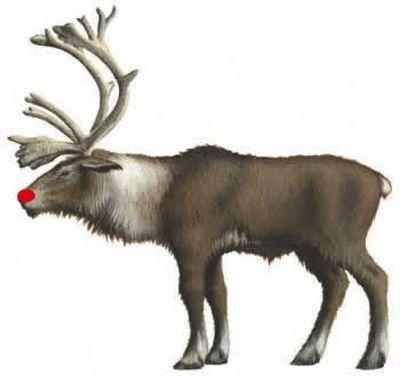 071218_reindeer_2