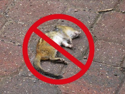 No_hunting