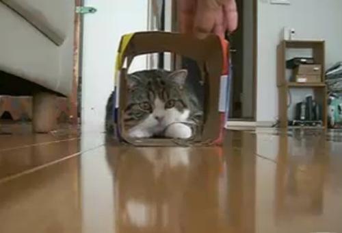 Dr_mel_cat_2