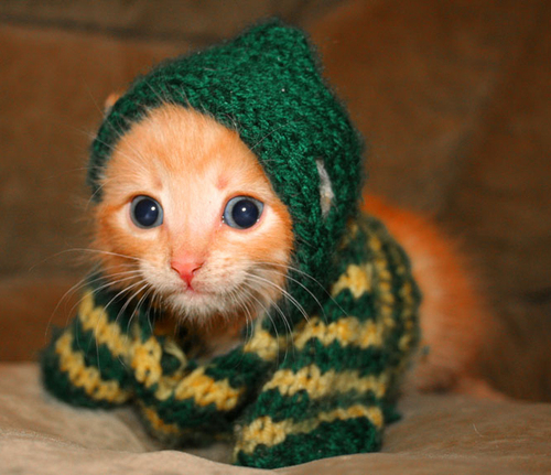 Knitted_kitten